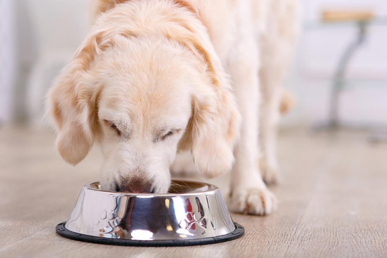 Hundefutter und Futterergänzungen