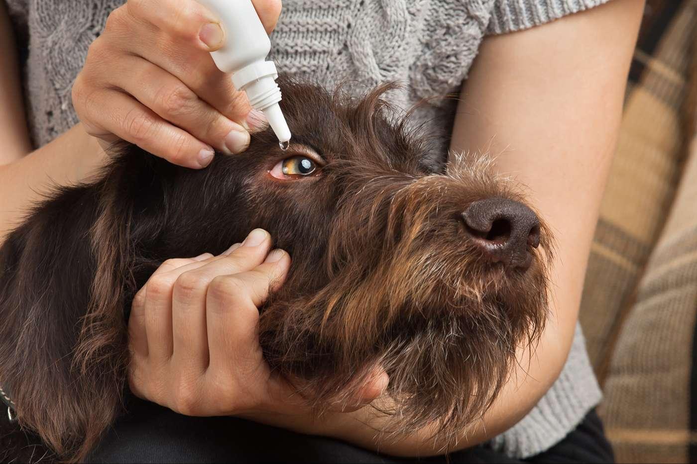Hundepflege & Hygiene